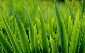 Should You Fertilize Your Lawn?