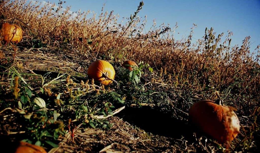 Prepare your vegetable garden beds for winter big blog - Prepare vegetable garden for winter ...