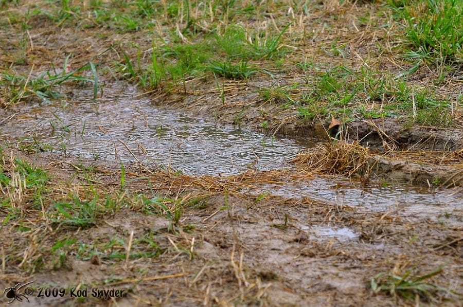 How i solved drainage problems in my yard pt 1 for Rainwater drain problems