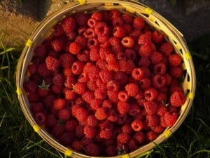 organic raspberries in basket