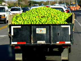 in-season food green tomatoes on truck