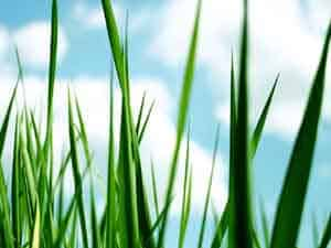 Spring lawn care - an organic guide