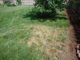 Summer lawn care: Has your grass turned brown?