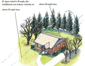 planting trees as windbreak around house home