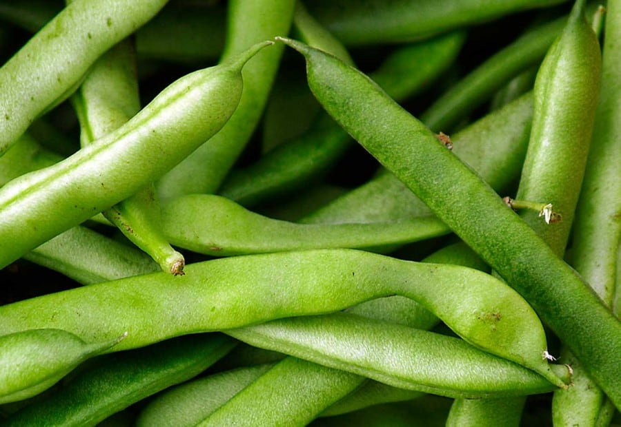 how to grow pole beans from seed
