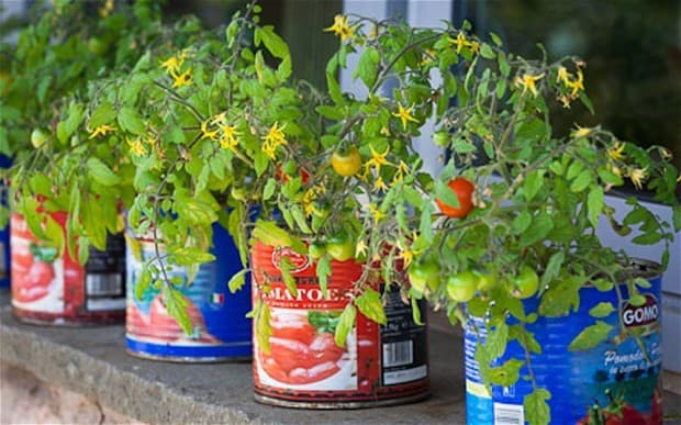 How To Grow Tomatoes And Other Vegetables In Containers