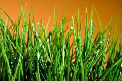 Dangers of Inorganic Lawn Care
