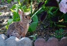 rabbit in flower garden