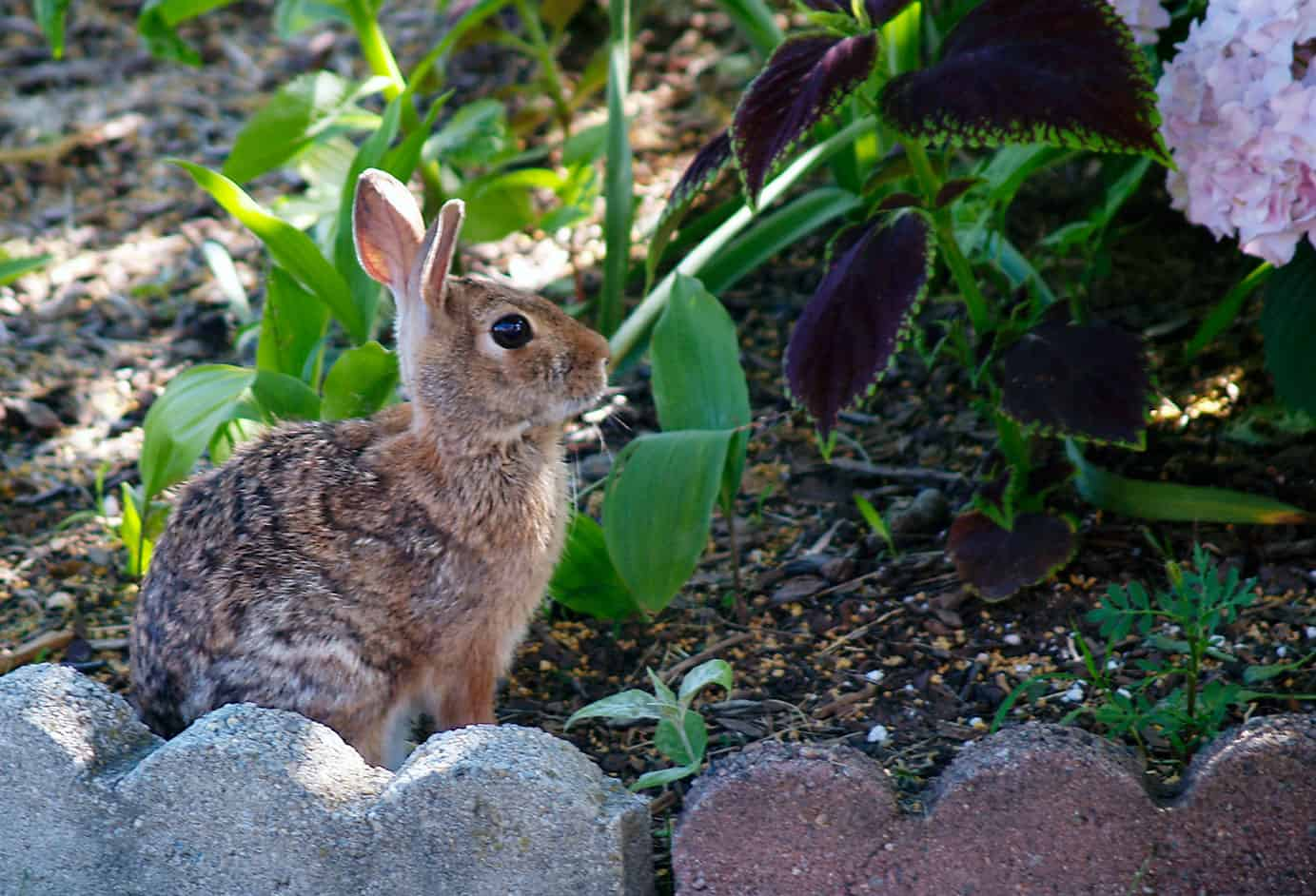 What Is The Best Rabbit, Squirrel and Deer Repellent?