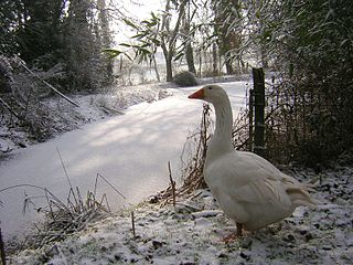 How To Protect Your Garden Pond During Winter
