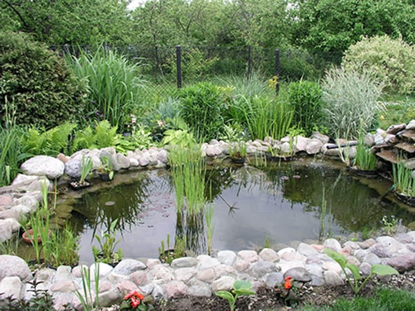 What 39 s wrong with my garden pond water for Preparing pond water for fish