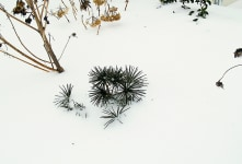 protect plants from winter damage