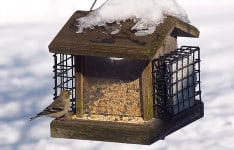 bird on bird feeder pest control