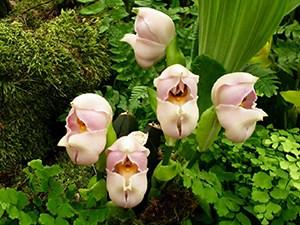 swaddled babies flower 10 Of The World's Weirdest Flowers